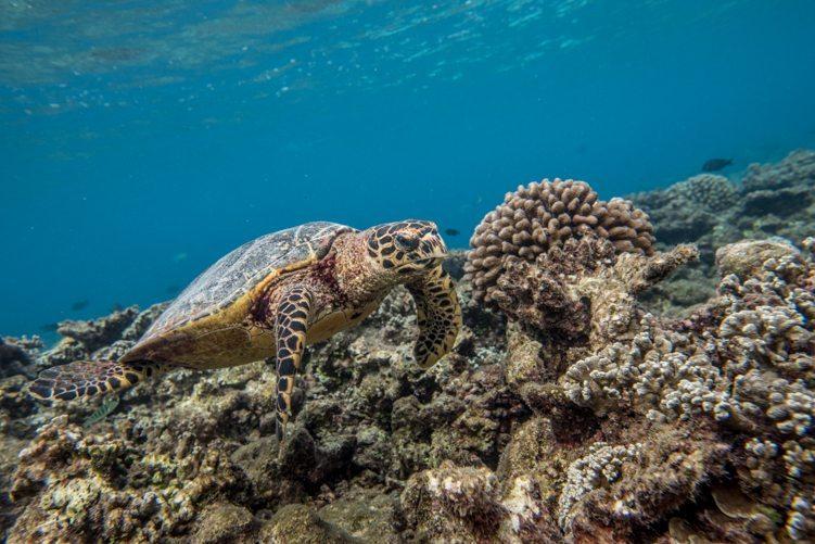 Embudu Insel Malediven