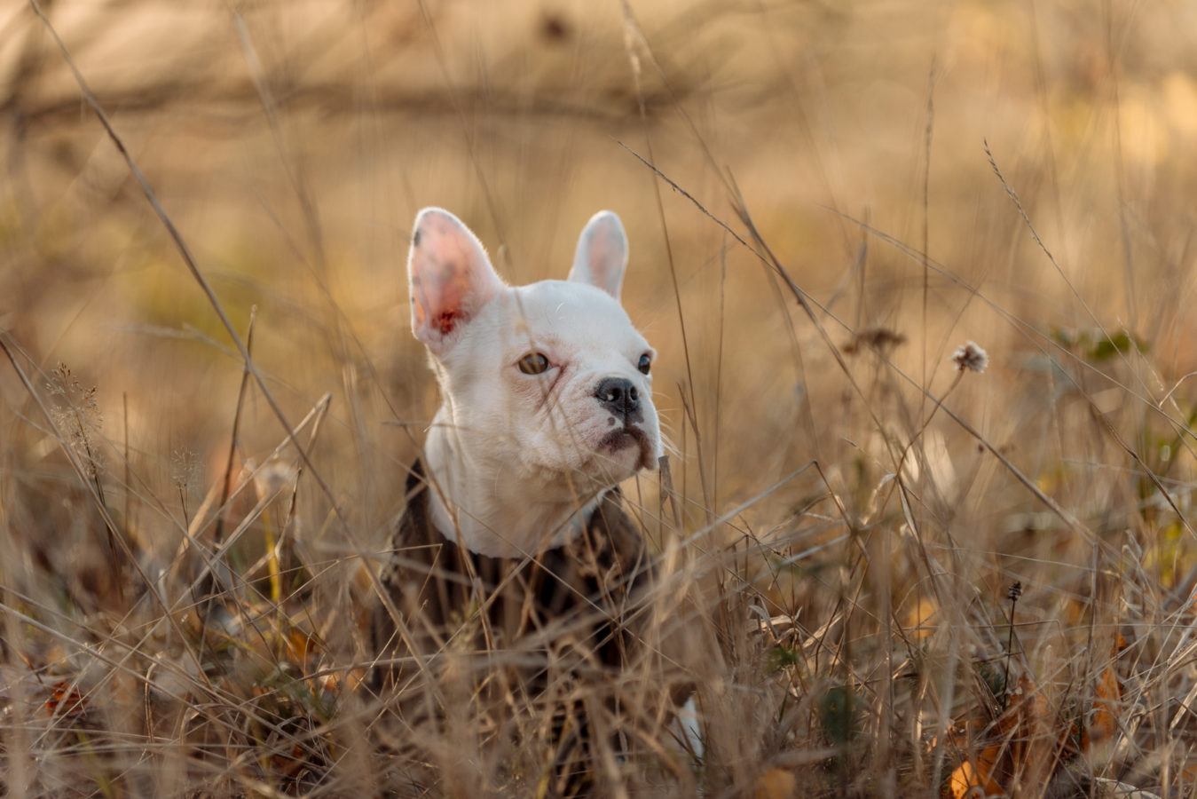 Hundefotografie Hannover